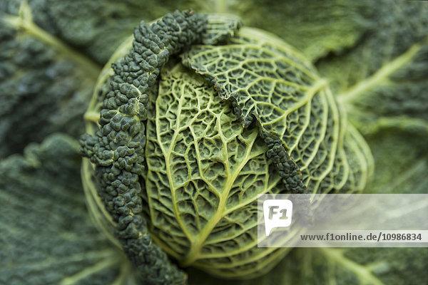 Wirsing im Gemüsegarten