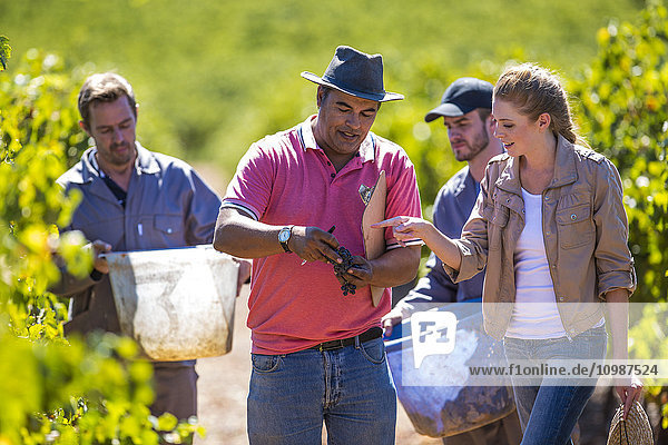 Mann und Frau im Weinberg bei der Traubenuntersuchung