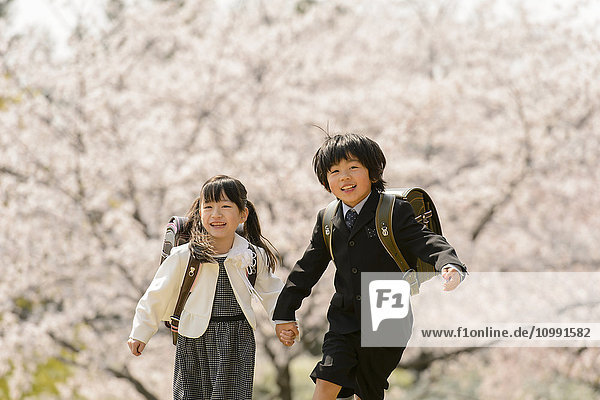 Japanese elementary school students and cherry blossoms