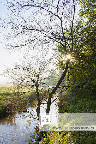 Sun through Tree Branches by Stream at Sunrise  Hesse  Germany