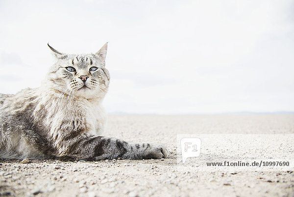 Cat resting on ground