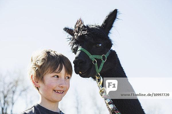 Portrait of boy (6-7) with black alpaca