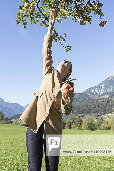 Austria  Salzburger land  Maria Alm  Mature woman picking apples from tree