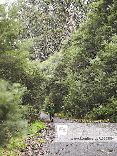 Australia  New South Wales  Katoomba  Rear view of woman walking along empty road in forest