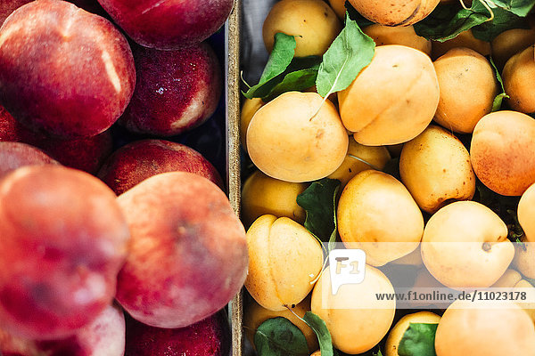 High angle view of peaches and apricots for sale at market stall