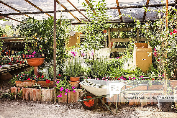 Wheelbarrow by plants growing in greenhouse