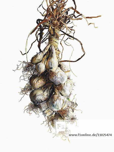 Aquarell hängender weißer Zwiebeln an einem Faden