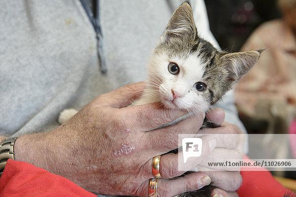 Tiergestützte Intervention mit Katze im Seniorenheim