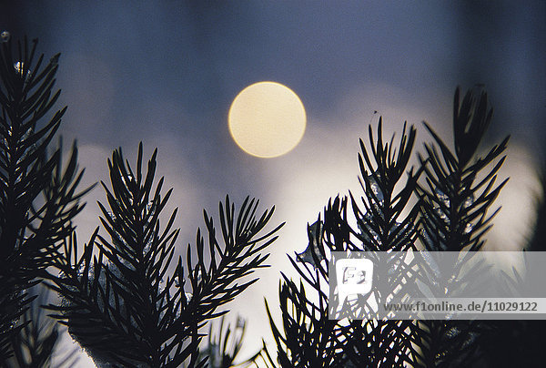 Silhouette of leaves against moon