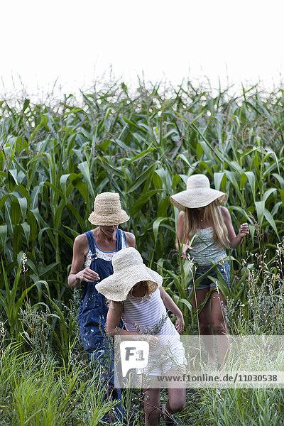 Family walking near field of corn