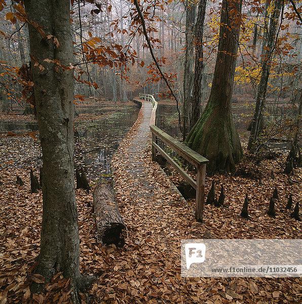 Boardwalk through swamp.