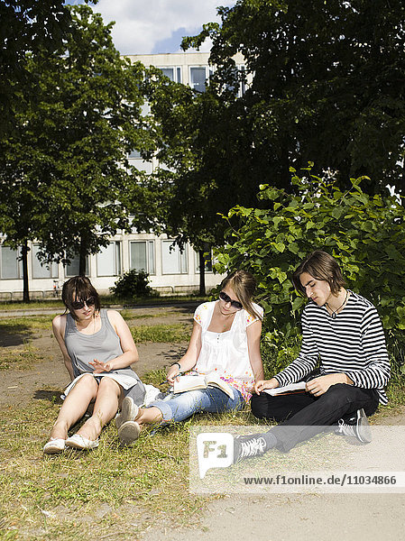 Three young persons studying outside in the sun  Sweden.