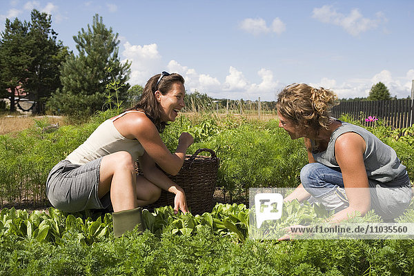 Two women in a garden plot.