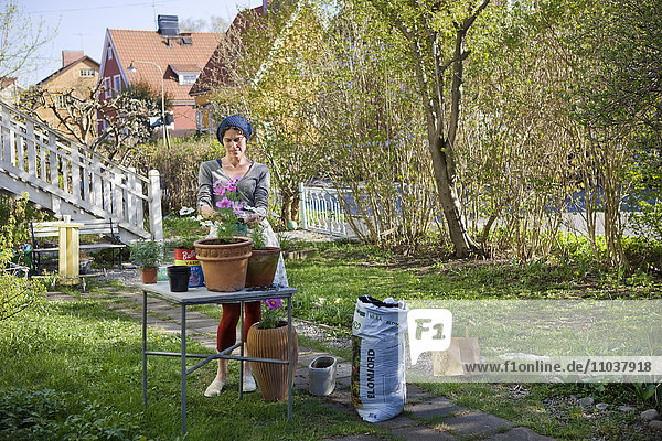 Woman planting in pots  Sweden.