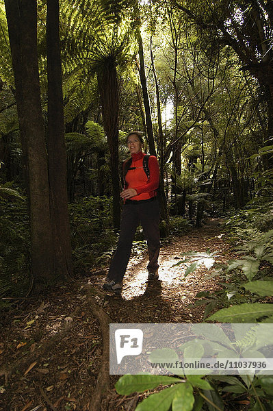 A woman walking in a forest  New Zealand.