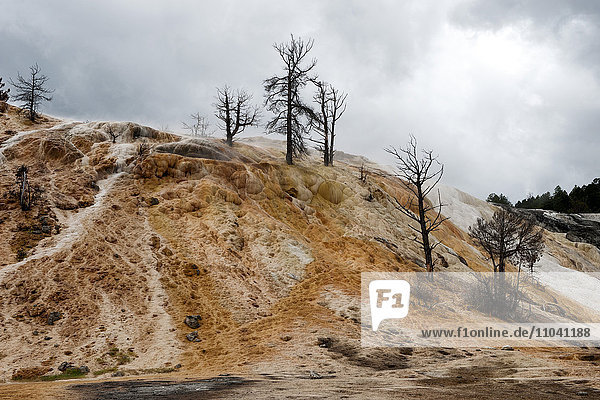 Geothermiegebiet im Yellowstone Nationalpark  Wyoming  USA
