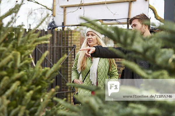 A woman and a man choosing a Christmas tree from a large selection of pine trees.