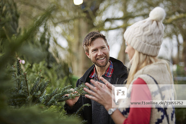 A man and woman discussing and choosing a traditional pine tree  Christmas tree.