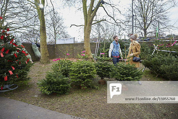 A woman customer and member of staff choosing a traditional pine tree  Christmas tree.