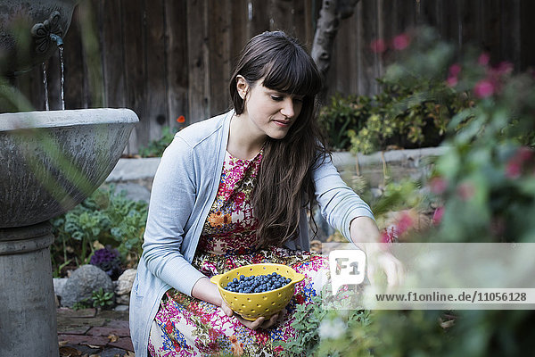 A young woman picking blueberries from plants in the garden.