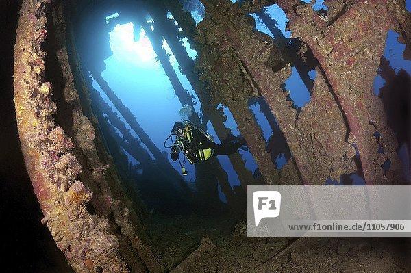 Taucher schwimmt im Wrack der SS Carnatic Dampfschiff  Rotes Meer  Sharm el Sheikh  Ägypten  Afrika