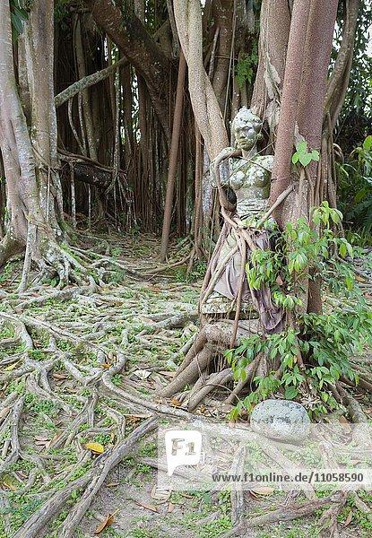 Statue einer balinesischen Frau  Künstler Louis van der Noordaa  gefangen in den Wurzeln von einem Bodhi-Baum im Garten des Museum Puri Lukisan  Ubud  Bali  Indonesien  Asien