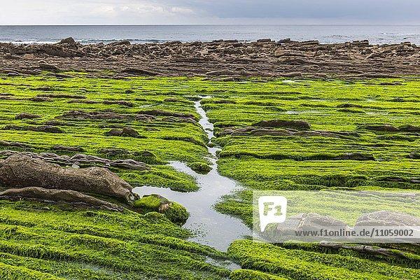 Flysch  verschiedene Gesteinsschichten  kantabrische Küste  Deba  Baskenland  Spanien  Europa