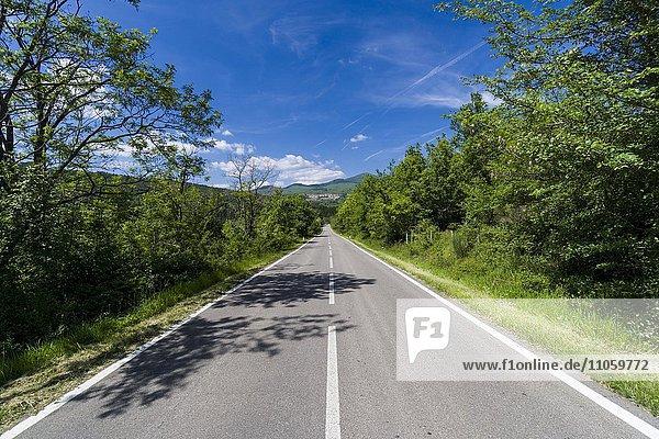 Typische Toskana-Landschaft mit Hügeln und Bäumen  Straße führt zu einer Stadt  Santa Fiora  Toskana  Italien  Europa