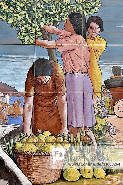Wandkacheln mit einem Bild der Zitronenernte  Amalfi  Amalfiküste  Costiera Amalfitana  Provinz Salerno  Kampanien  Italien  Europa