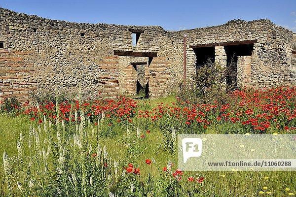 Ruine  Bürgerhaus  antike Stadt Pompeji  Kampanien  Italien  Europa