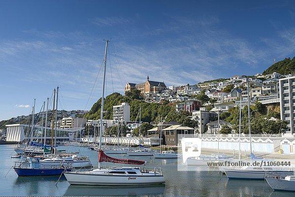 Segelyachten im Hafen  hinten Oriental Bay  Wellington  Nordinsel  Neuseeland  Ozeanien