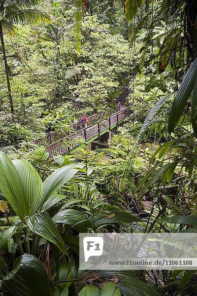 Wanderer auf Holzbrücke im tropischen Regenwald  Wanderroute Trace Victor Hugues  Nationalpark Guadeloupe  Kleine Antillen  Karibik  Guadeloupe  Nordamerika Wanderer auf Holzbrücke im tropischen Regenwald, Wanderroute Trace Victor Hugues, Nationalpark Guadeloupe, Kleine Antillen, Karibik, Guadeloupe, Nordamerika