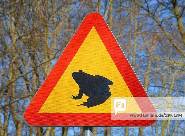 Schild zum Frosch schutz in Ystad Sand Wald  Skåne län  Schweden  Europa