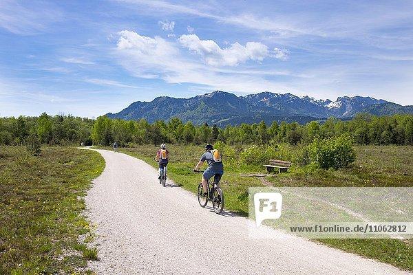 Radweg in Isarauen mit Brauneck und Benediktenwand bei Steinbach  Gaißach  Isarwinkel  Oberbayern  Bayern  Deutschland  Europa
