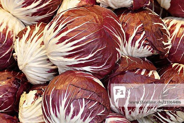 Radicchio (Cichorium intybus var. foliosum)