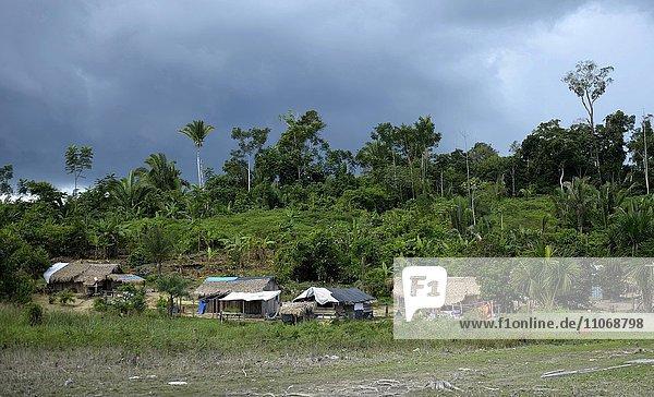 Indigenous Village Sawle Muybu  people of Mudndururú  river Rio Tapajos  Amazon rainforest  district Itaituba  Pará state  Brazil  South America