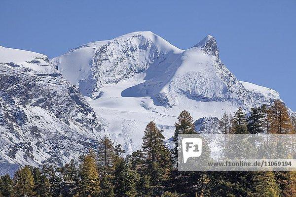 Findelntal im Herbst mit schneebedecktem Strahlhorn und Adlerhorn  Zermatt  Wallis  Schweiz  Europa