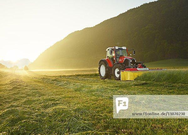 Traktor mäht bei Sonnenaufgang ein Feld  Kundl  Inntal  Tirol  Österreich  Europa