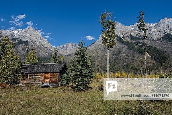 Deerlodge Cabin  erste Aufsichtshütte von 1904  Yoho Nationalpark  British Columbia  Kanada  Nordamerika