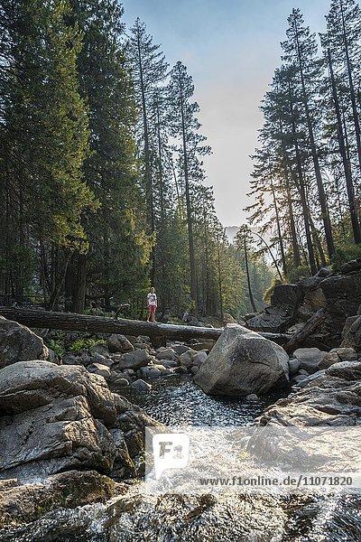 Junger Mann überquert auf Baumstamm den Fluss Merced River  Mist Trail  Yosemite-Nationalpark  Kalifornien  USA  Nordamerika