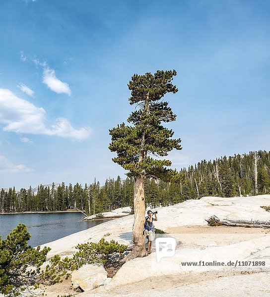Junger Mann  Tourist fotografiert  Baum am Lower Cathedral Lake  Sierra Nevada  Yosemite Nationalpark  Kalifornien  USA  Nordamerika