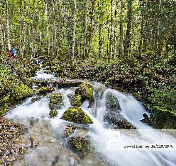Junger Mann an einem Bach  Röthbach mit bemoosten Steinen  Flusslauf am Ende des Röthbachfall Wasserfall  Salet am Königssee  Nationalpark Berchtesgaden  Berchtesgadener Land  Oberbayern  Bayern  Deutschland  Europa