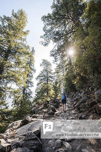 Wanderin  Frau wandert am John Muir Trail  Yosemite National Park  Kalifornien  USA  Nordamerika