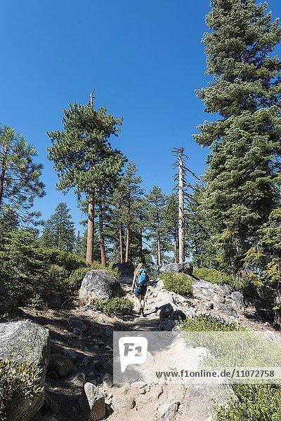 Wanderin auf einem Wanderweg zwischen Kiefern  Yosemite Nationalpark  Kalifornien  USA  Nordamerika