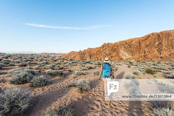 Frau wandert durch Wüste  Valley of Fire State Park  Nevada  USA  Nordamerika
