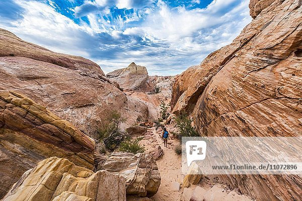 Rot orange Sandsteinfelsen  Wanderweg White Dome Trail  Valley of Fire State Park  Mojave Wüste  Nevada  USA  Nordamerika