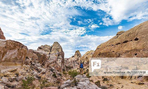 Rot orange Sandsteinfelsen  Touristin auf Wanderweg White Dome Trail  Valley of Fire State Park  Mojave Wüste  Nevada  USA  Nordamerika