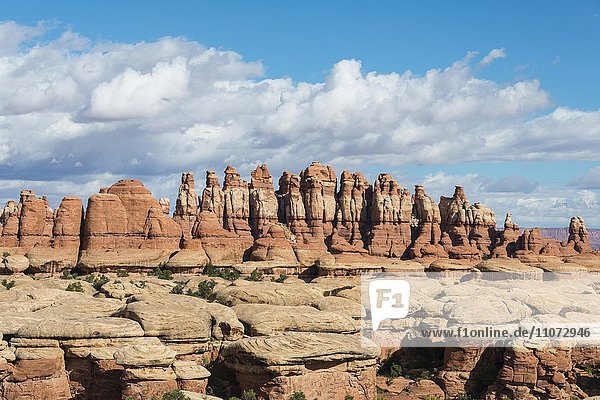 Chesler Park  Felsnadeln  Felsplateau  Felsformationen The Needles District  Canyonlands Nationalpark  Utah  USA  Nordamerika