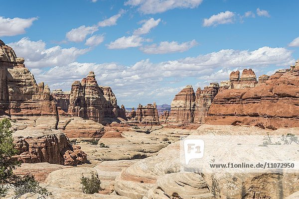 Felsnadeln  Felsplateau  Felsformationen The Needles District  Canyonlands Nationalpark  Utah  USA  Nordamerika