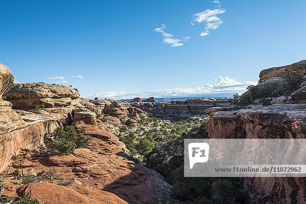 Canyon  Felsnadeln  Felsplateau  Felsformationen The Needles District  Canyonlands Nationalpark  Utah  USA  Nordamerika